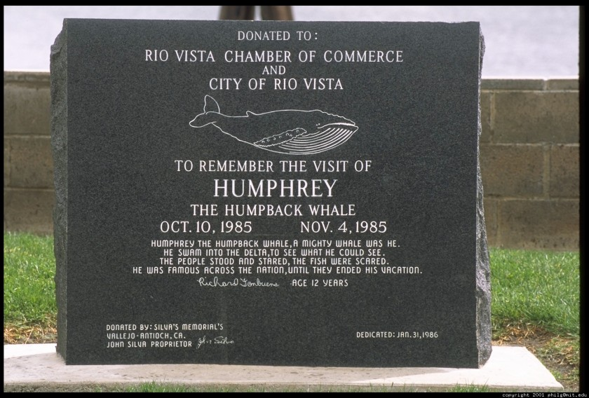 humphrey-the-whale-sign-37.4
